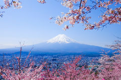 Mt Fuji med Cherry Blossom (Sakura) i våren, Fujiyoshida, Ja royaltyfri foto