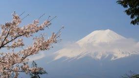 Mt fuji med den körsbärsröda blomningen lager videofilmer