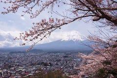 Mt fuji med den körsbärsröda blomningen och gult gräs i en molnig dag Ett landskap i Japan med dess anmärkningsvärda berg arkivbilder