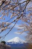 Mt Fuji med Sakura blomningar Royaltyfri Foto