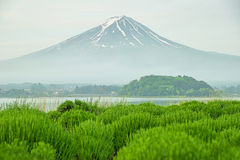 Mt fuji in morning at kawaguchi, Japan.  stock images