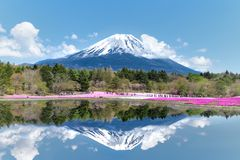 Mt. Fuji-the most famous place in Japan. Mt. Fuji with a lake Royalty Free Stock Image
