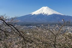 Mt. Fuji Royalty Free Stock Photo