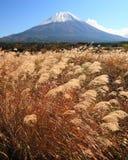 Mt. Fuji nella caduta Fotografie Stock