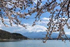 Mt Fuji och Cherry Blossom arkivbild