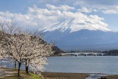 Mt Fuji och Cherry Blossom arkivfoton