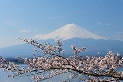 Mt Fuji och Cherry Blossom royaltyfri fotografi