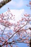 Mt Fuji och Cherry Blossom i Japan vårsäsong & x28; Japan Cal fotografering för bildbyråer