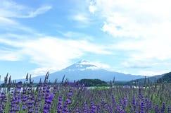 Mt Fuji och lavendel Royaltyfri Fotografi