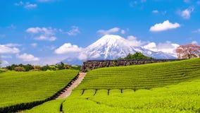 Mt Fuji och tefält lager videofilmer