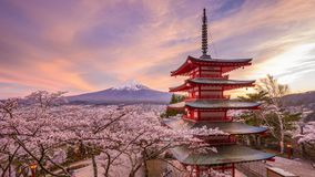 Mt. Fuji and Pagoda in Spring. Fujiyoshida, Japan at Chureito Pagoda and Mt. Fuji in the spring with cherry blossoms stock footage