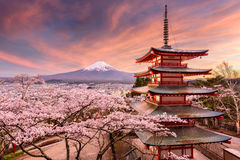 Mt. Fuji and Pagoda in Spring stock photo