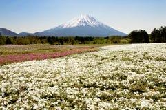 Mt. Fuji and Phlox Royalty Free Stock Image