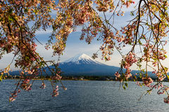 Mt. Fuji and Pink Cherry Blossom royalty free stock images