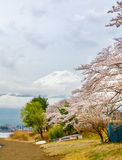 Mt fuji and pink cherry blossom trees in Japan Stock Photography