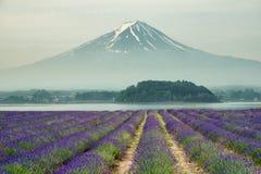 Mt.fuji and purple color of lavender at lake Kawaguchiko royalty free stock images