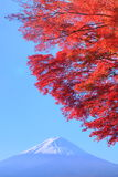 Mt. Fuji with red leaves Royalty Free Stock Photo