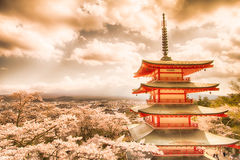 Mt Fuji with red pagoda in cherry blossom sakura in spring season. stock images