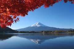 Mt.Fuji reflect to the lake in autumn stock photo