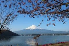 Mt.Fuji with Sakura at Lake Kawaguch Stock Images
