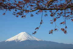 Mt.Fuji with Sakura at Lake Kawaguch Royalty Free Stock Image