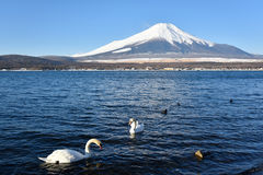 Mt Fuji in See Yamanaka Stockbilder
