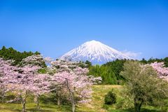 Mt. Fuji in Spring Stock Images