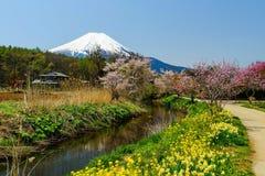 Mt. Fuji with spring garden, Yamanashi Stock Image