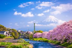 Mt. Fuji in Spring royalty free stock photography