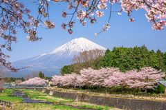 Mt. Fuji in Spring stock photo