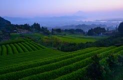 Mt.Fuji and tea plantation at dawn Royalty Free Stock Photos