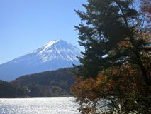 Mt. Fuji and Trees Royalty Free Stock Photography