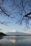 Mt Fuji y Cherry Blossom Foto de archivo