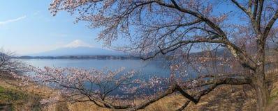 Mt Fuji y Cherry Blossom Fotos de archivo libres de regalías