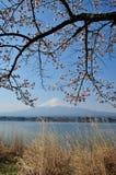 Mt Fuji y Cherry Blossom Imagen de archivo