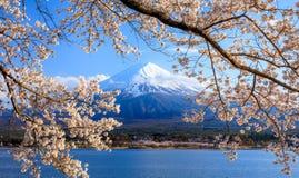 Mt Fuji y Cherry Blossom en el lago Kawaguchiko, Japón Fotos de archivo libres de regalías