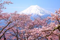 Mt Fuji y Cherry Blossom en la estación de primavera de Japón (caloría japonesa Fotos de archivo libres de regalías