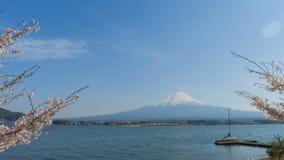 Mt Fuji y lago de kawaguchi con lapso de tiempo del árbol de la flor de cerezo almacen de video