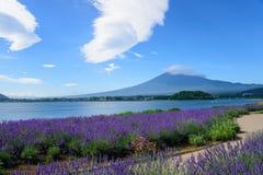 Mt Fuji y lavanda en la orilla del lago de Kawaguchi Imagenes de archivo