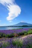 Mt Fuji y lavanda en la orilla del lago de Kawaguchi Imagen de archivo