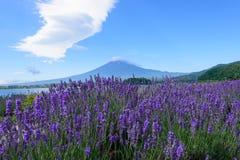Mt Fuji y lavanda en la orilla del lago de Kawaguchi Foto de archivo libre de regalías