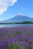 Mt Fuji y lavanda en la orilla del lago de Kawaguchi Fotografía de archivo libre de regalías