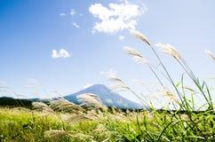 Mt Fuji z Japońską pampasy trawą w jesieni, Japonia Zdjęcia Royalty Free