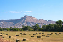 Mt. Garfield from Orchard Mesa. Summer hay field with rectangular bales and Mt. Garfield near Palisade, Colorado Stock Photography
