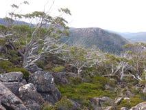 MT Gebied Alpiene Forrest Stock Afbeeldingen