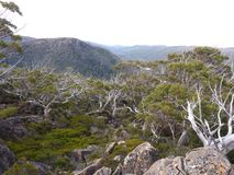 MT Gebied Alpiene Forrest Royalty-vrije Stock Foto's