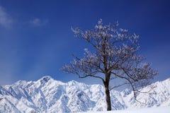 Mt. Goryudake, Nagano Japan. Mt. Goryudake, snow covered mountain in nagano japan Royalty Free Stock Image
