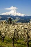 Mt-Haube, Apfelgärten, Oregon Lizenzfreie Stockfotos