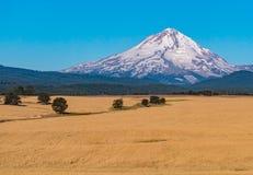 Mt-Haube im Sommer Sun 2 Lizenzfreie Stockfotografie