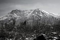 Mt.圣Helens 免版税图库摄影
